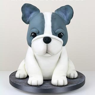 Beau The French Bulldog