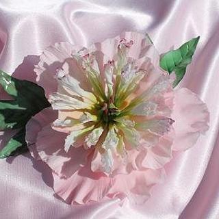 Sugar Peony Rose