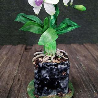 Orchid Plant and flowers