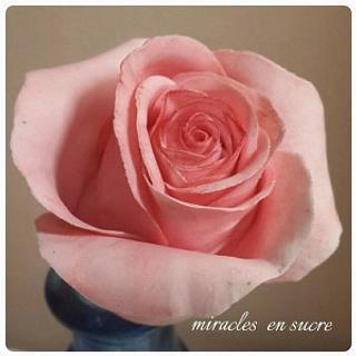 miracles_ensucre