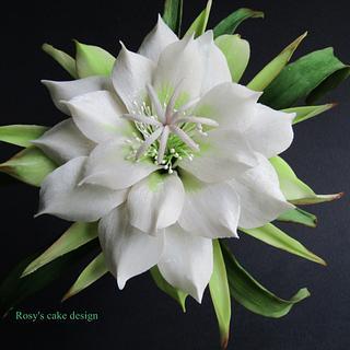 Cactus flower in gum paste.