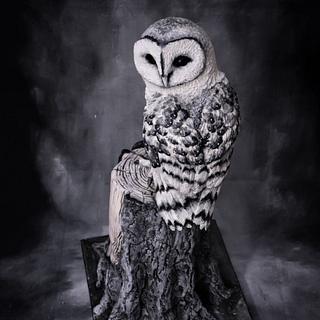 Owl- Around the World in Sugar