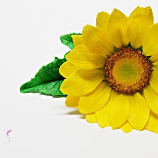 suflower- sweetkolor