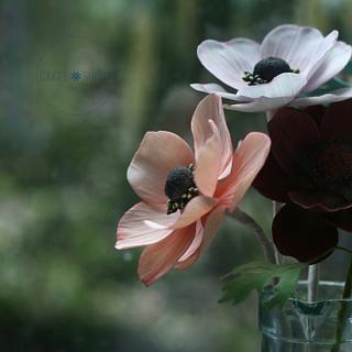Gumpaste Anemone Flower