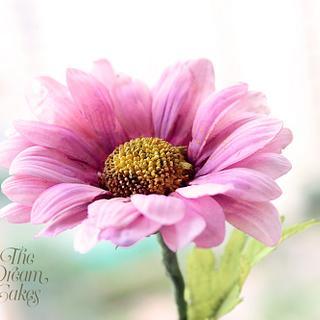 Pink Sugar Daisy