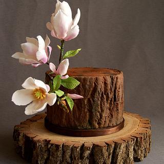 Magnolia tree trunk