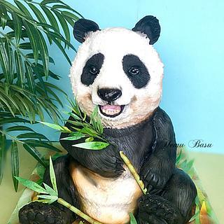 Panda 🐼