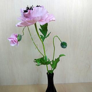 Sugar pink poppy