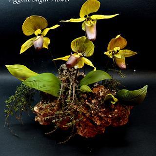 Lady's Slipper Orchid Sugar Flower