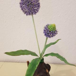 Gumpaste  Allium