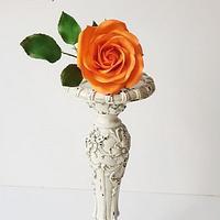 Sugar Rose!