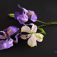 Iris wafer paper
