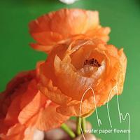 Wafer paper Ranunculus by Petya Shmarova