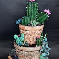 Cactus pot cake by Delice