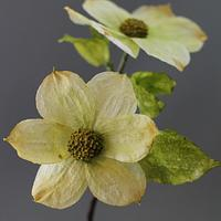 Wafer paper dogwood flowers.