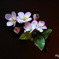 Apple blossoms  from wafer paper