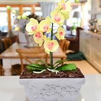 Orchid cake by Lulubelle's Bakes