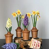 Spring cake…. by More_Sugar