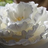 Lace Wedding Cake. by Dulcie Blue Bakery ~ Chris