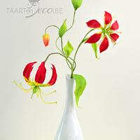 Gloriosa or Flame Lily
