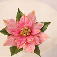 Poinsettias Love