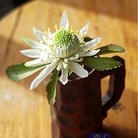 Sugar Flowers/ Gumpaste Flowers