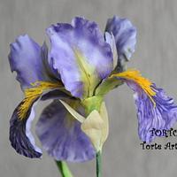 Batik German Iris