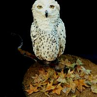 Autumn owl.