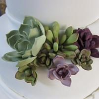 Sugar Succulents