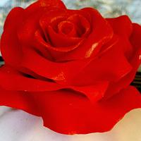 Red Velvet Rose by miettes