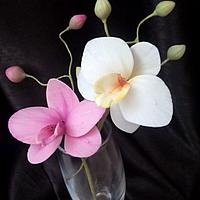 My sugar orchids