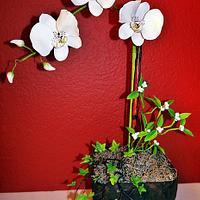 Sugar Phalaenopsis Orchid arragement