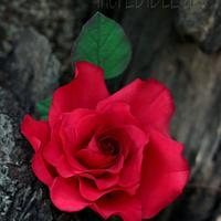 Flower paste Red Garden Rose! by Rumana Jaseel