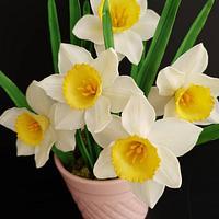 Sugar daffodils