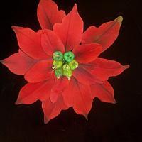 Gumpaste  Poinsettia