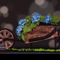 Hydrangeas in a wheelbarrow