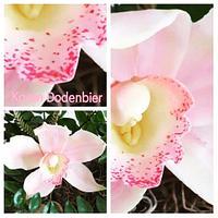 Cymbidium sugar orchid