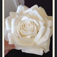 Another white icing rose