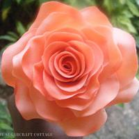Peach and dust pink rose