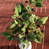 blackberry))))