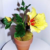 Hibiscus sugar flower by Maria