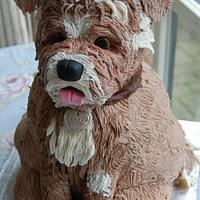 Our Doggie Coco