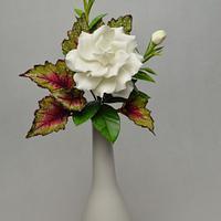 Gardenia, begonia