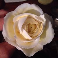 Lemon Cream Sugar rose