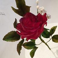 elegant gumpaste rose