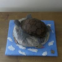 Turtle on a Rock