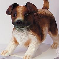 Little dog cake