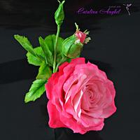 Freeformed Pink sugar Rose- Garden Beauty