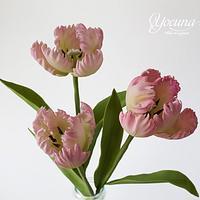Tulipán Loro - Parrot Tulips
