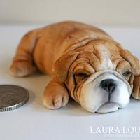 Tiny Bulldog
